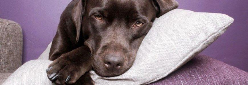 Что делать, если у собаки рвота?